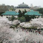 Con sus fideos secos calientes, la Torre de la Grulla Amarilla y sus perspectivas brillantes, Wuhan invita a los visitantes e inversionistas globales
